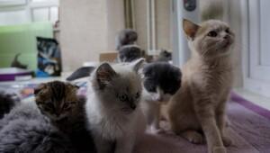 Gümrükten satışa sunulan kedi ve köpeklere alıcı çıkmadı