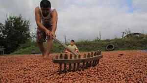 Fındık üreticisine 4 milyon TL ek başvuru ödemesi yapıldı