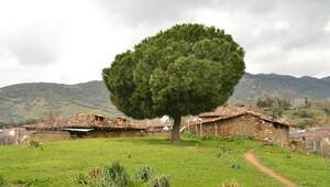 Zamana direnen tarih kasabası: Birgi