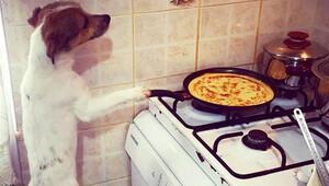 Antalyada internet fenomeni köpek