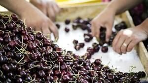 Sebze ve meyve ihracatçılarından Şili seferi