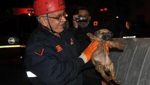Foseptiğe düşen yavru köpeği itfaiye kurtardı