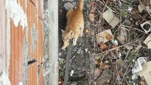 Mahsur kalan kediyi itfaiye kurtardı