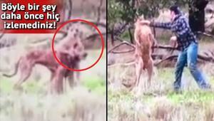 Köpek sahibi kangurunun suratına yumruk attı