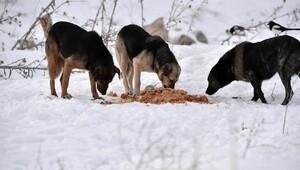 Sokak hayvanları kışın da aç kalmıyor