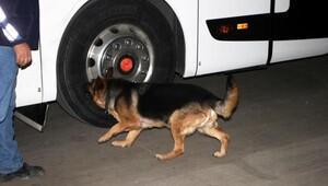 Yolcu otobüsünden 53 kilo esrar çıktı