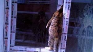 Yavrularına ulaşamak isteyen kedi, pencerede sıkışarak boğuldu