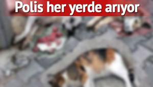 Antalya'da 12 köpek ve 2 kediyi zehirlediler