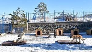 Sokak hayvanlarına konforlu bakım evi