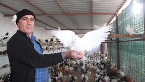 Zimmetçi veznedarın güvercinleri icradan satılacak