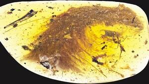 99 milyon yıllık dinozor fosili bulundu