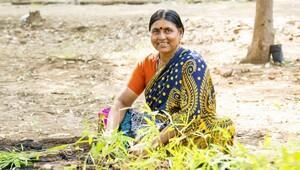 Hindistanda 24 saatte 50 milyon ağaç dikildi