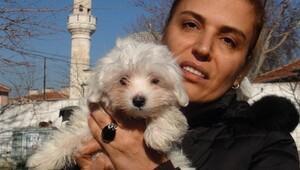 Türkiyeye kaçak sokulan 4 yavru köpek ihaleyle satıldı