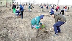 Lüleburgaz'da öğrenciler 150 çam fidanı dikti