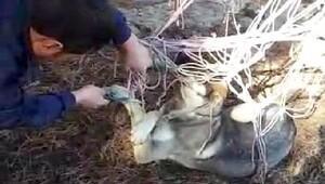 Ayağı hamağın ipine dolanan köpeği itfaiye ekipleri kurtardı