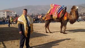 Buharkent deve güreşleri iptal oldu