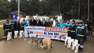 Bursa'da sokak hayvanlarına yem bırakıldı