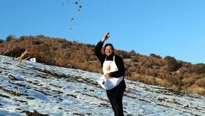 Yozgat'ta kar üstünde sedir tohumu ekimi yapıldı
