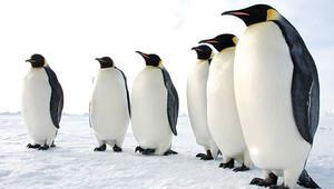 Karda düşmemek için penguen gibi yürüyün