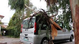 Fethiyede lodosun devirdiği ağaçlar, iş yeri ve araçlara zarar verdi