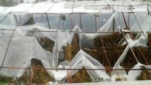 Kar ve rüzgar seraları yıktı