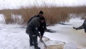 Gala Gölü Milli Parkı'na 1 ton yem bırakıldı