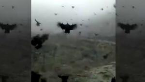 Uçan tavuklar