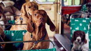 Londra'da köpeklere özel otobüs turu
