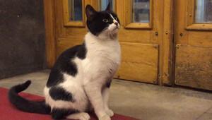 CHPnin kedisi Şeroya arkadaş geldi: Kulis