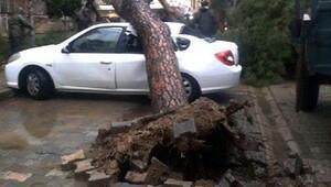 Park halindeki otomobilin üzerine ağaç devrildi