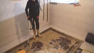 Kayıp kediyi bulanın halılarını 1 yıl ücretsiz yıkayacak