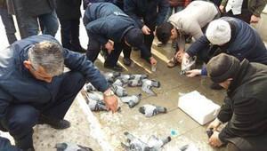 Kırıkkalede güvercin katliamı