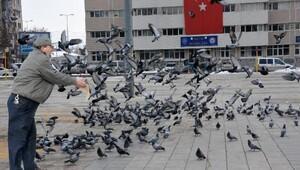 Kuşlara ve yaban hayvanlarına yem