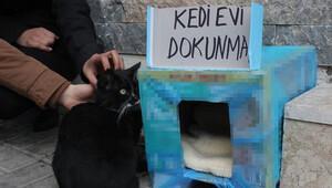 Denizlide kedi tartışması BİMERe taşındı