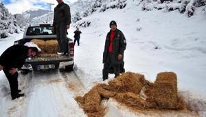 Düldül Dağına yaban hayvanları için yem bırakıldı