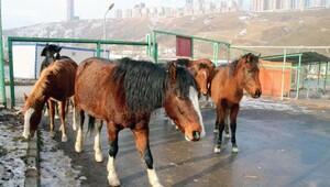 Bu kez Atlar şehire indi