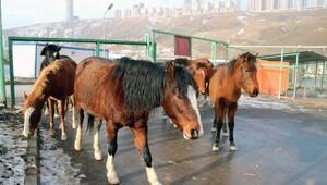 Atlar firarda
