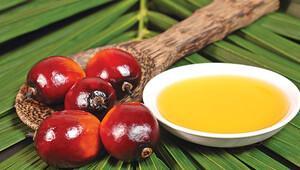 'Palm yağı'nda tartışma sürüyor