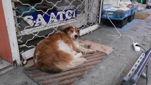 Esnaftan, üşüyen köpeğin altına paspas, önüne ısıtıcı