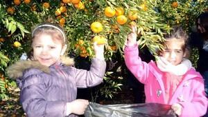 Çocuklar mandalina bahçesini tanıdı
