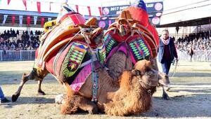 Kumlucada deve güreşleri yapıldı