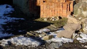Sokak köpekleri soğuktan korunmaya çalışıyor