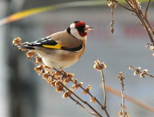 Göksu Deltası sayısız kuş türüne evsahipliği yapıyor...