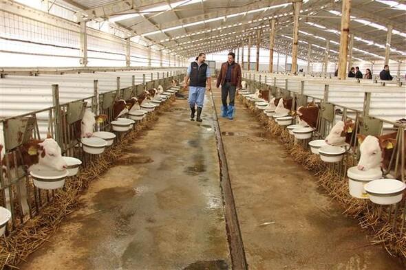 ODTÜlü mühendislerin sığır tesisi