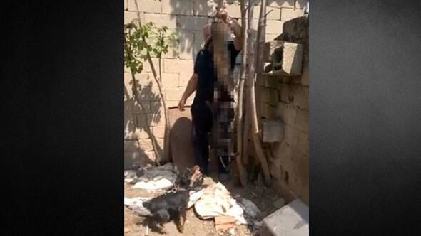 Kediye köpeklere parçalattı 2 bin lira ceza aldı
