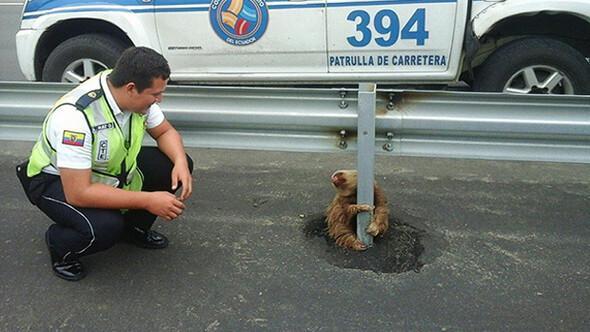 Otoyolda mahsur kalan tembel hayvanı polis kurtardı