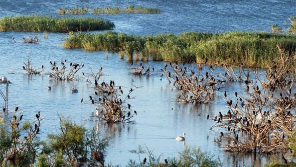 Manyas Gölü yoğun bakımda