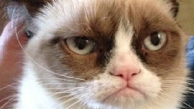 Grumpy Cat film yıldızı oluyor