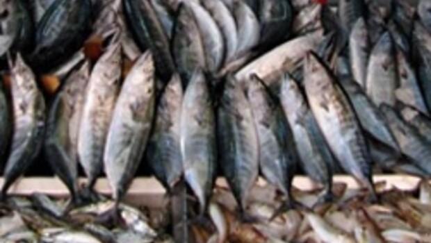 Balık takvimine bakmadan balık almayın