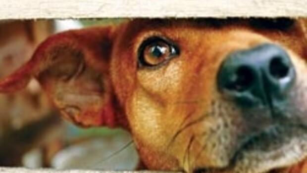 Hayvanlara tecavüz ve iskenceye hapis